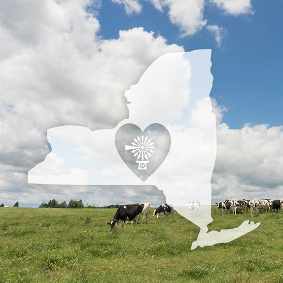 Organic Grass Fed Milk Farm to Table - Grass-Fed Organic Milk
