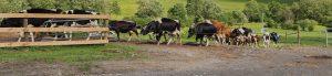 Waltz Farm header 300x69 - Waltz Farm header
