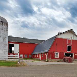 barn 300x300 - Hourigan Family Dairy
